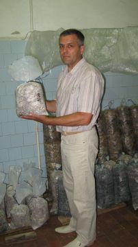 выращивание грибов вешенок в квартире