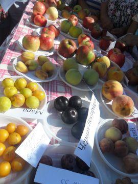 Плодовое разнообразие от С. Чудопалова