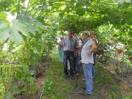 Виноградник Александра Мамаева поразил не только гостей, но и хабаровчан