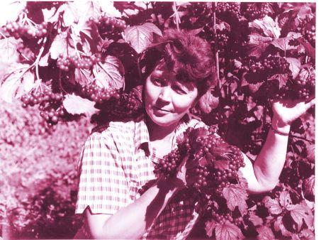 Двадцать четыре гора проработала на ГСУ Татьяна Шелепенко, сначала агрономом по сортоиспытанию ягодных культур, а затем заведующей.