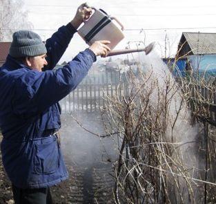 93 садоводческих некоммерческих объединения и товарищества действуют сегодня возле Хабаровска. Это примерно 16 тысяч дачных участков, на которых работают более 70 тысяч хабаровчан.