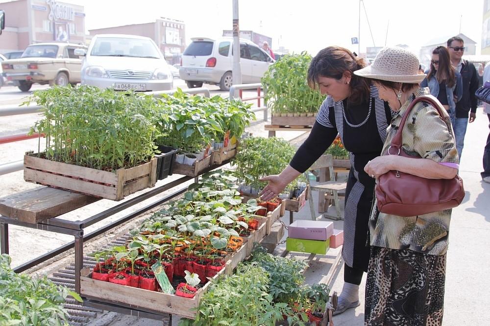 Все о выращивание рассады цветов для продажи 247