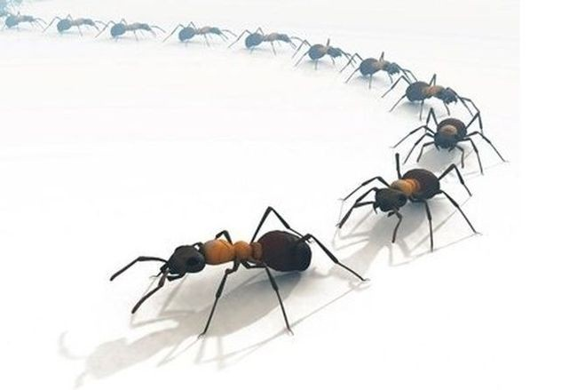 Главный «грех», за который муравьи заслуживают изгнания с огорода, это их любовь к тле