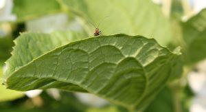 Отпугнуть муравьем могут растения, которые они не переносят. Фото Екатерины Ушаковой.