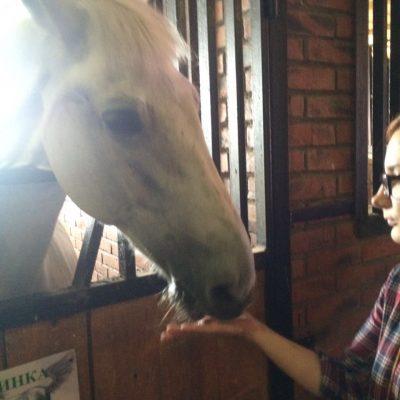 Лошадь-сладкоежка