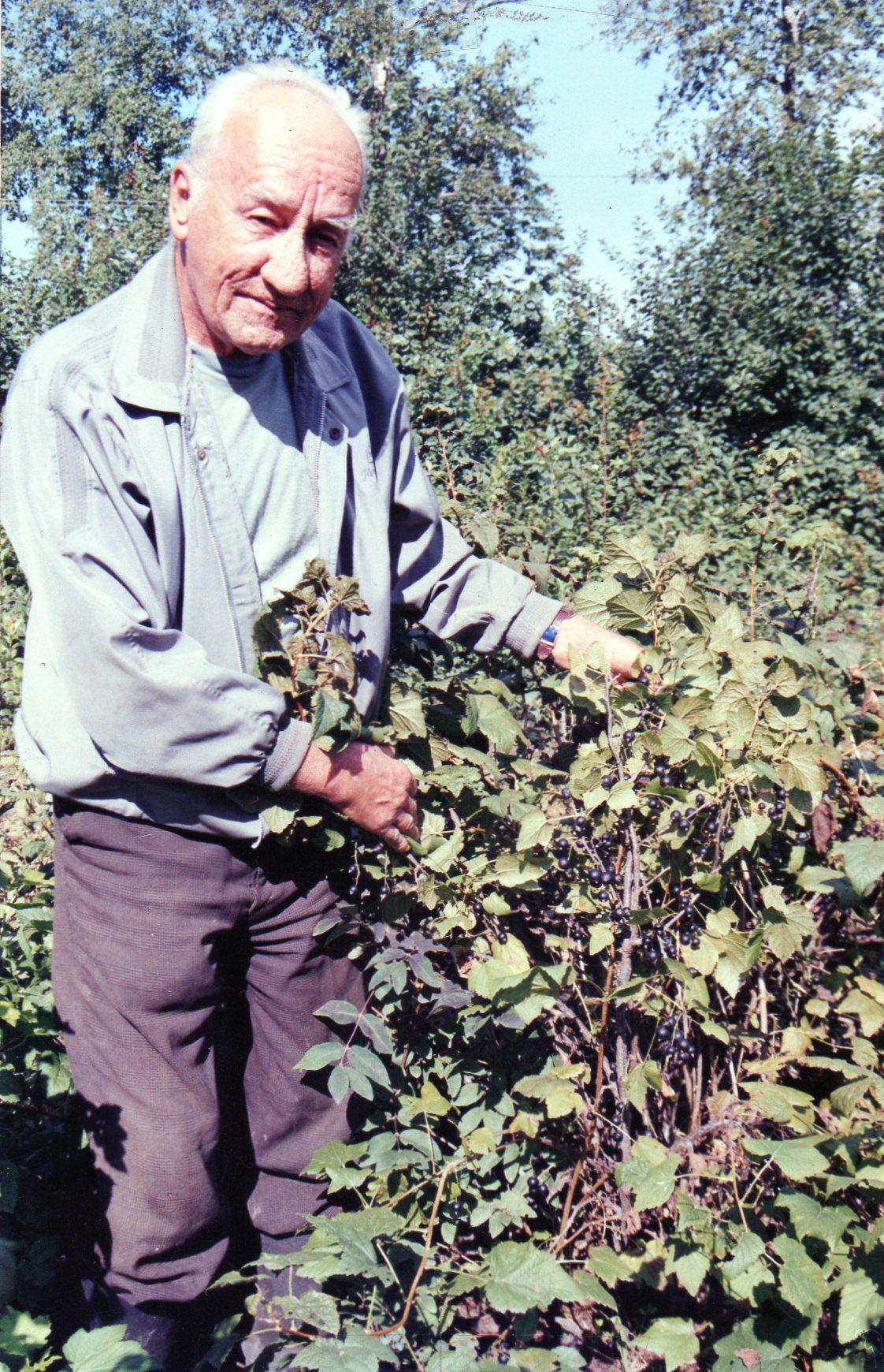 Основу сортимента чёрной смородины в Хабаровском крае составляют сорта, полученные в ДВ НИИСХ кандидатом с/х наук Вавиловым