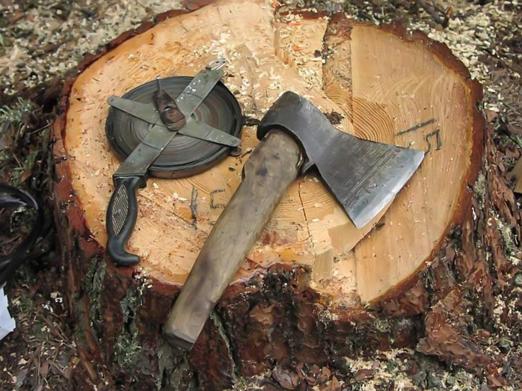 Дерево для дома обойдется вам дорого.