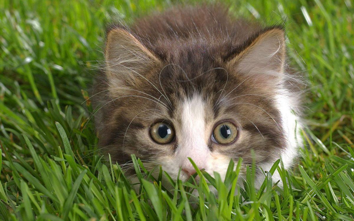 Кошка или мышеловка?