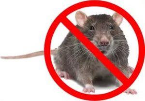 мышь опасность