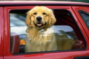 Никогда не оставляйте собаку одну в машине в жаркий день.