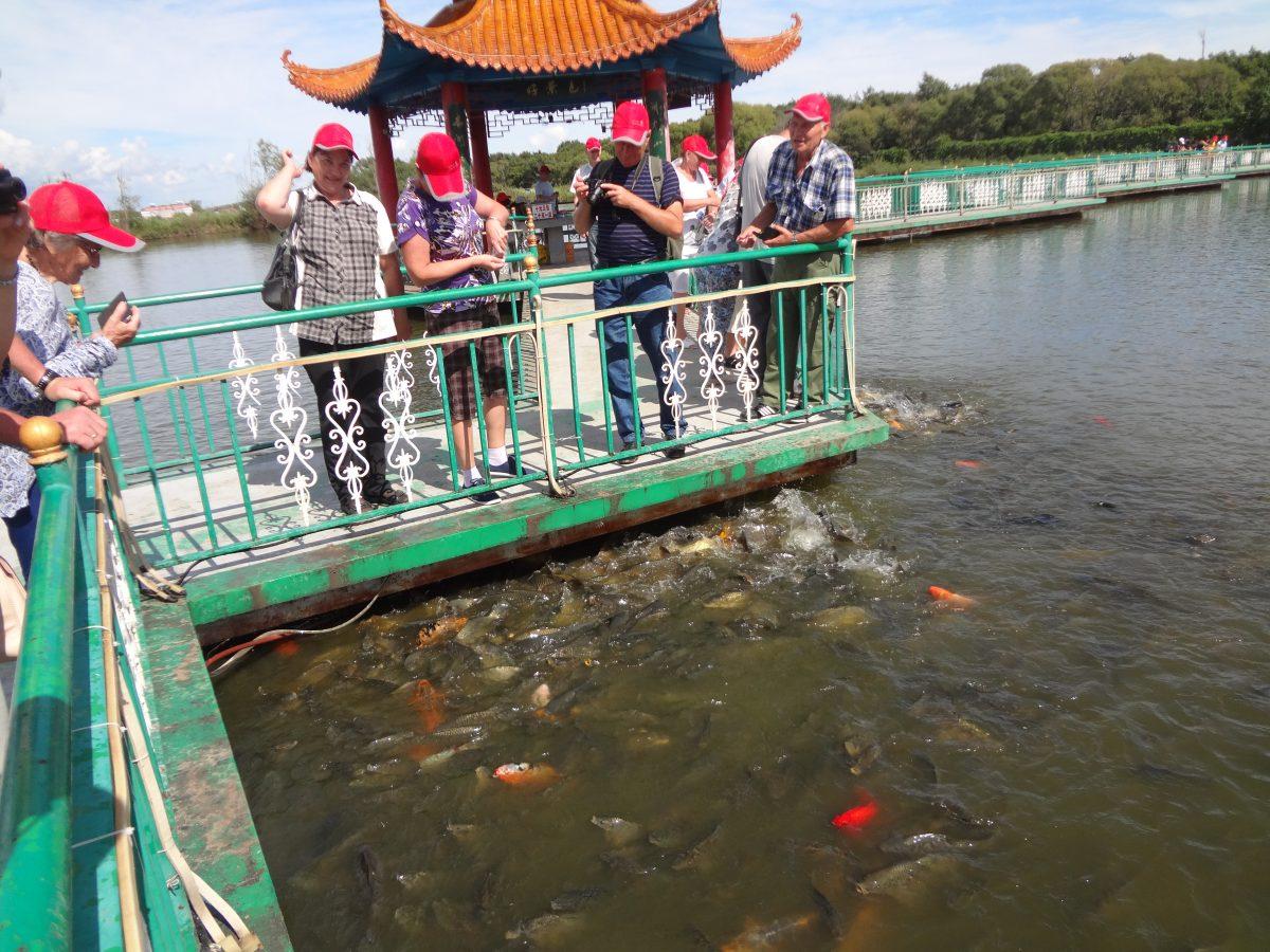 искусственном озере рыбки