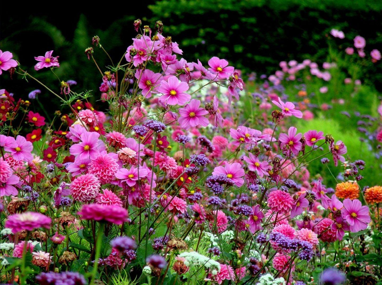 Цветы для сада однолетки фото название
