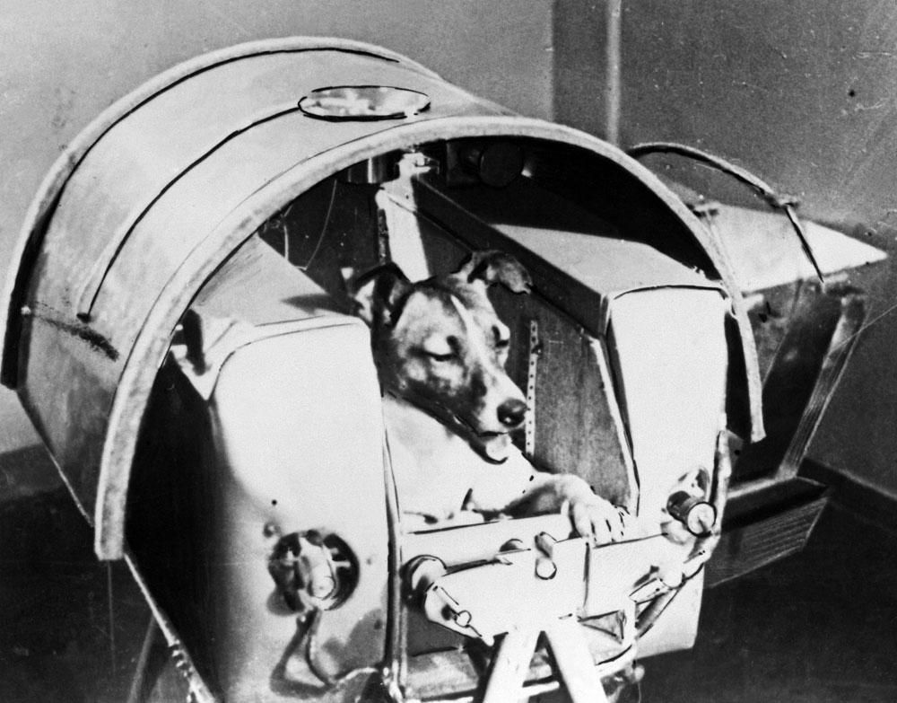meet-laika-the-first-dog-in-space-1