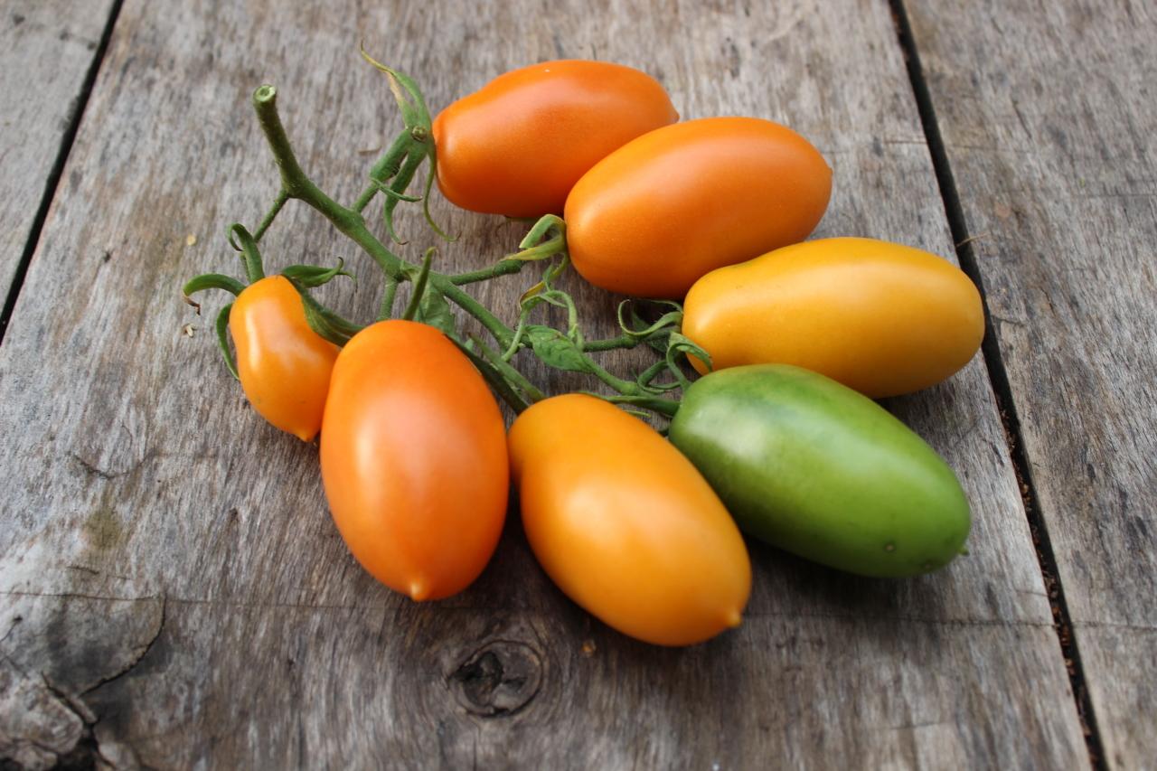 Сорта томатов, районированные в Хабаровском крае