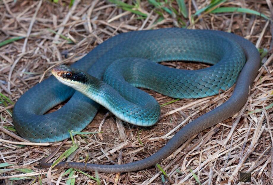 Экзотическое хобби: хабаровчанка держит ядовитых змей и пауков в качестве домашних питомцев (ФОТО)