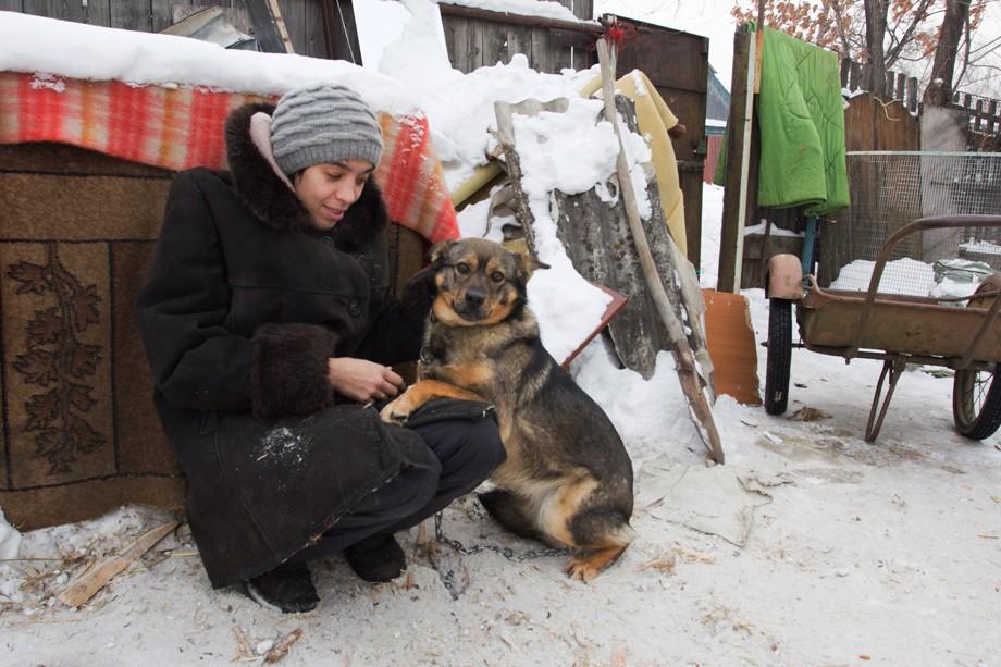 помощь приюту для бездомных животных Екатерина личко