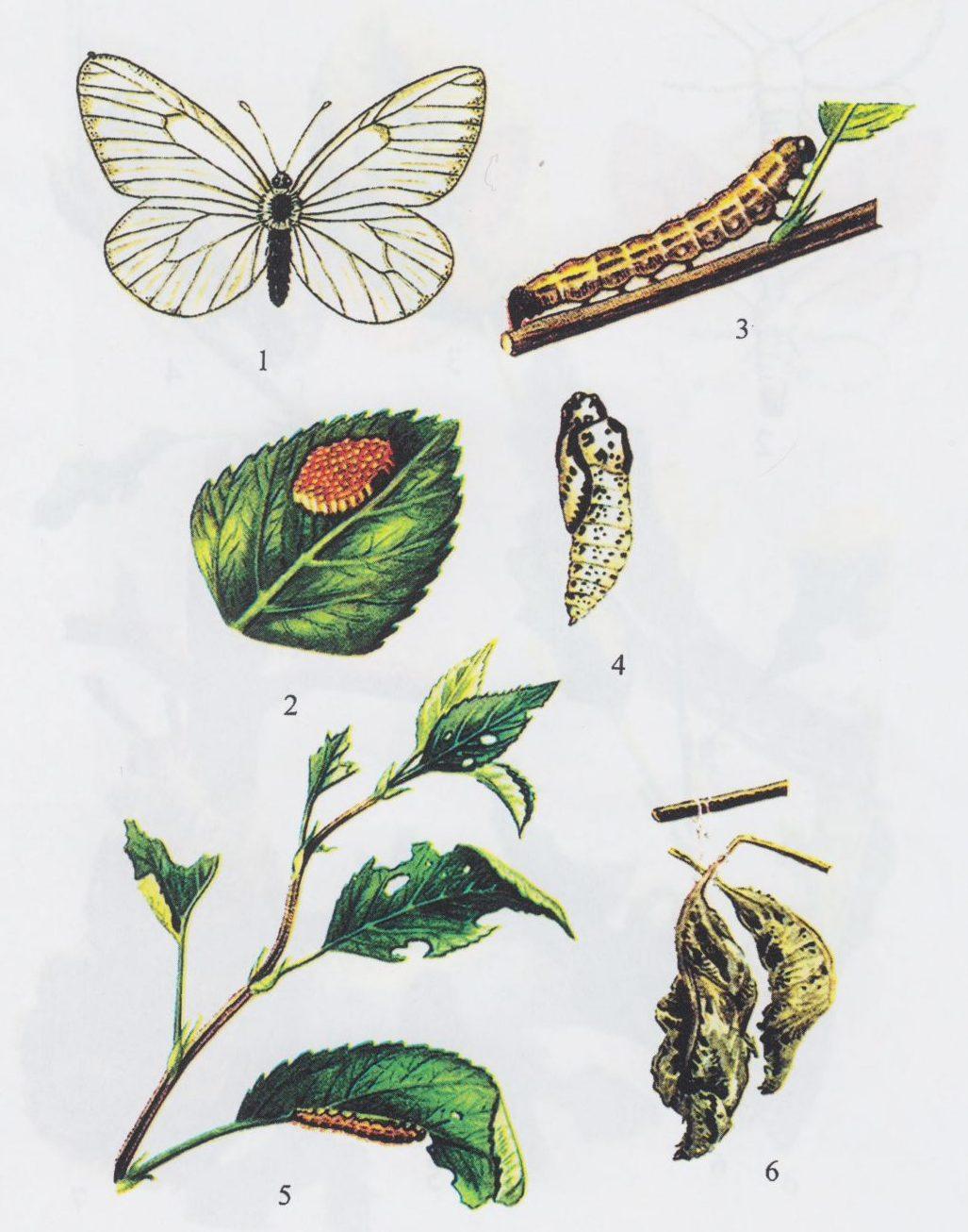 Вредители плодовых культур и меры борьбы с ними
