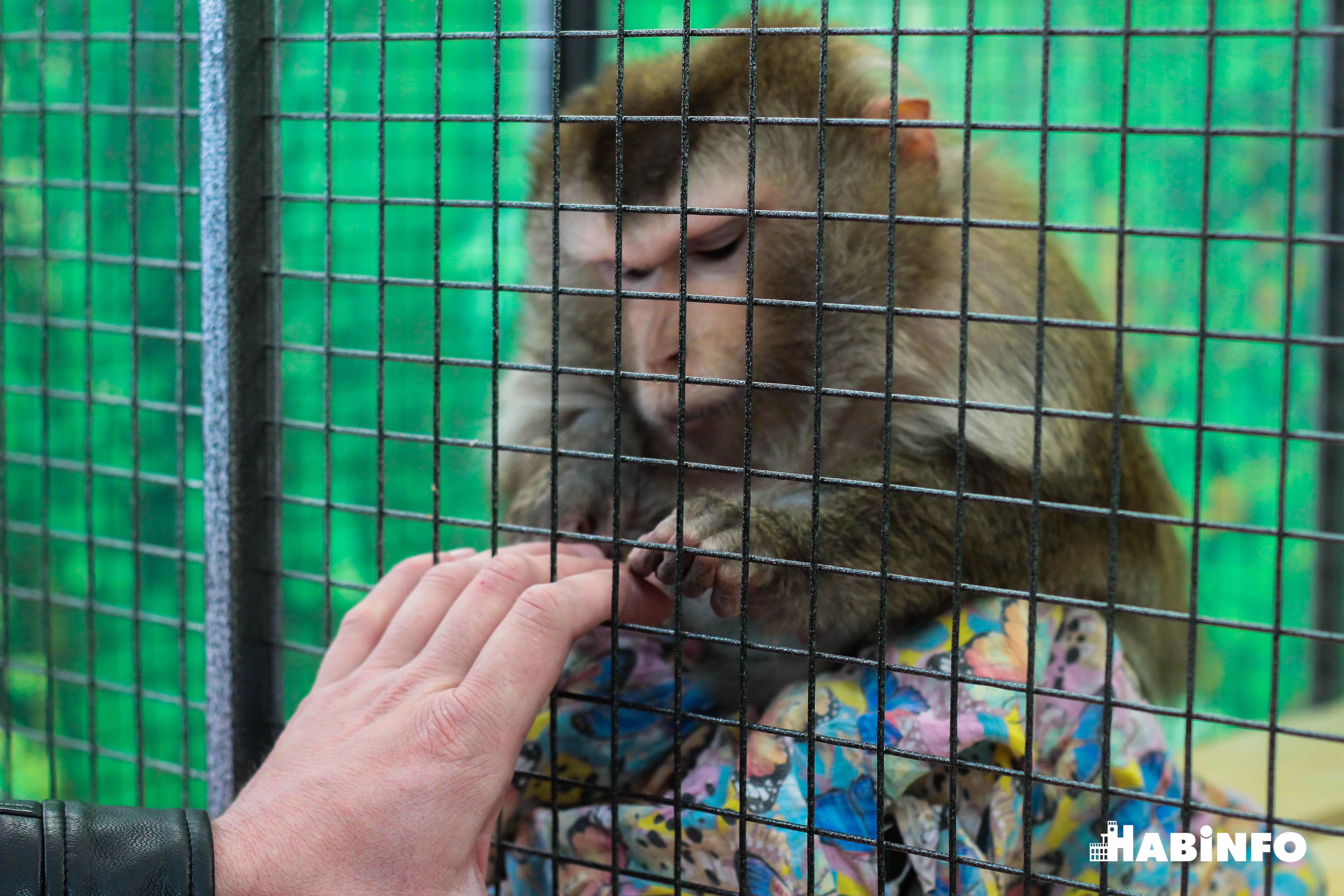 Выставка обезьян в Хабаровске: 15 видов приматов в одном месте (ФОТОРЕПОРТАЖ)