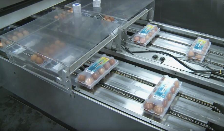 Какие яйца мы едим: репортаж с Хабаровской птицефабрики