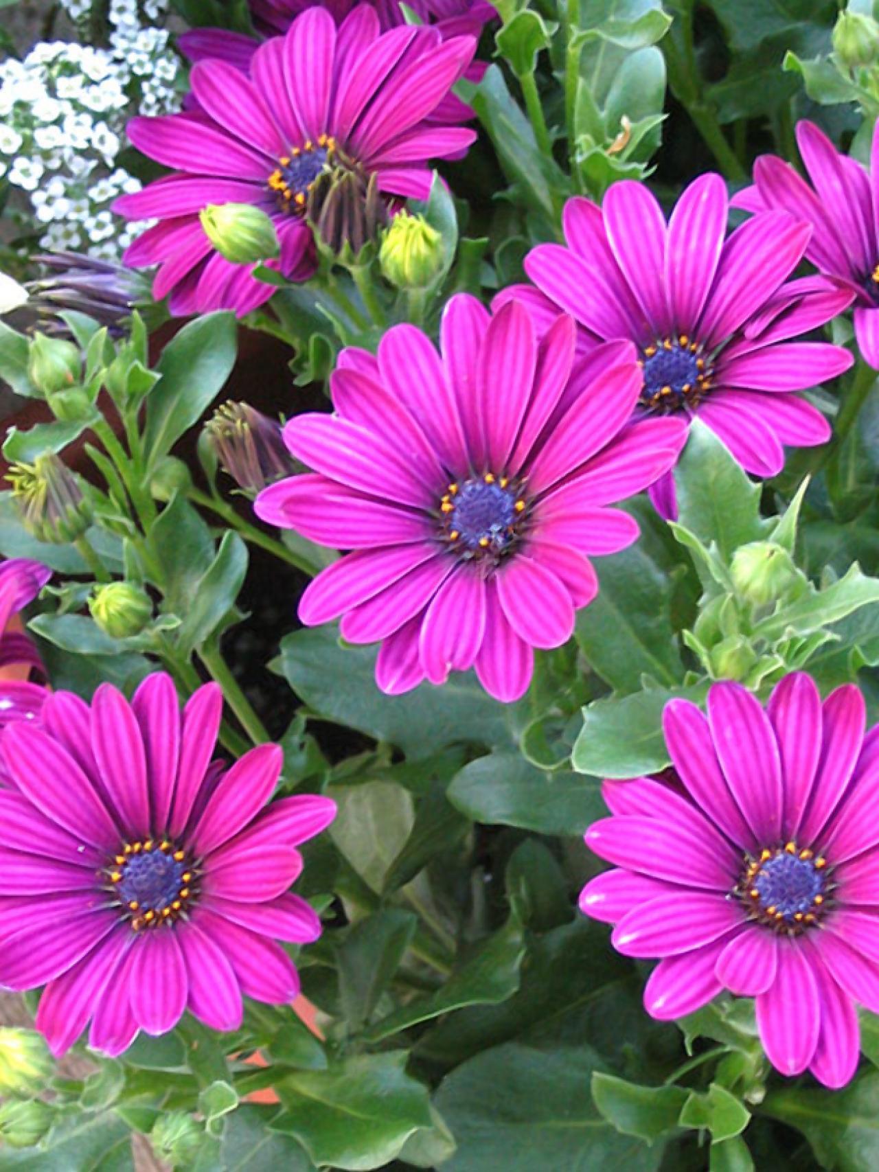 цветы для дачи цветущие все название