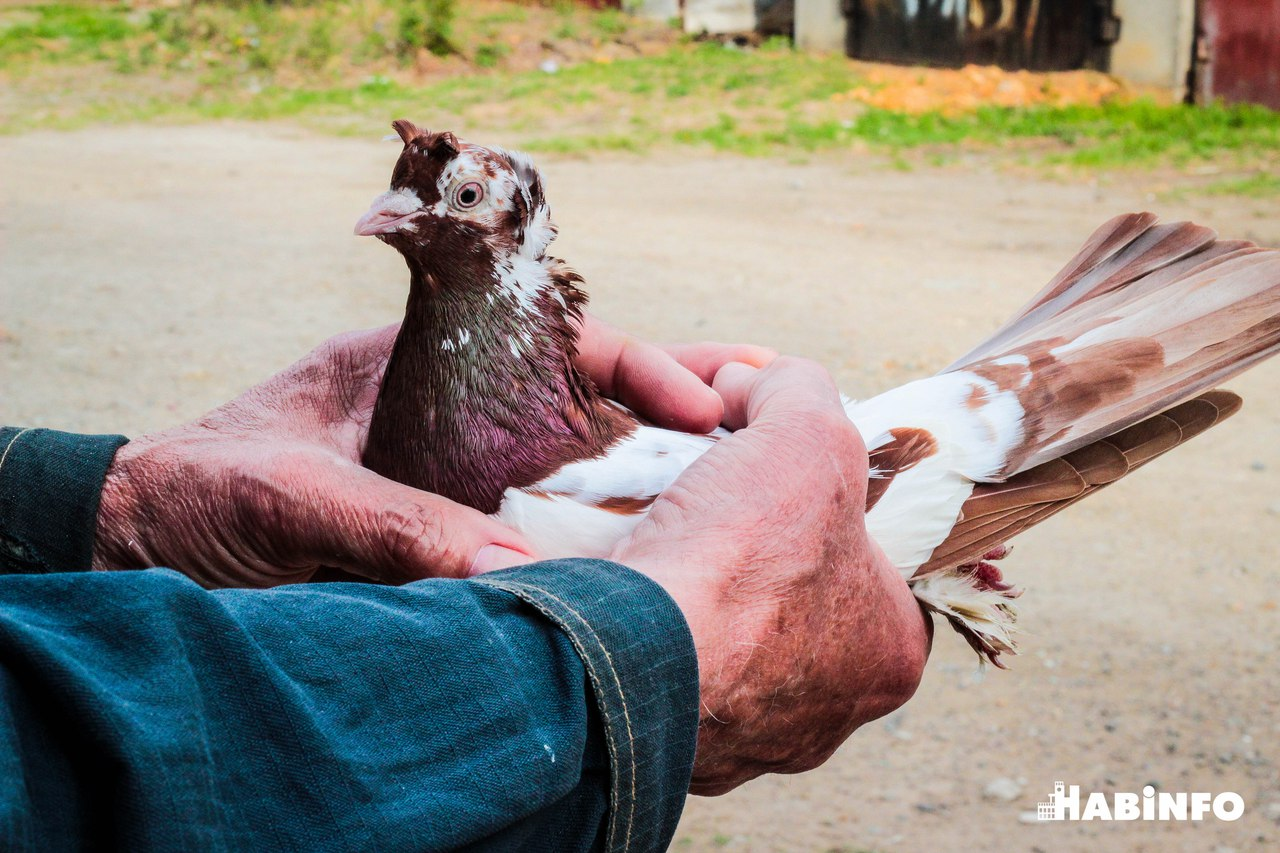 «Любовь и голуби» в Хабаровске
