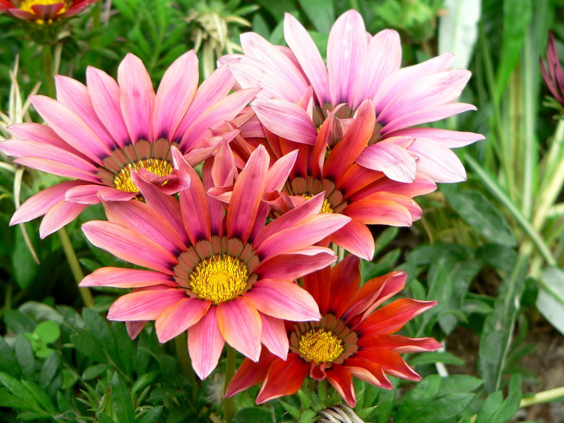 красивые цветы для дачи