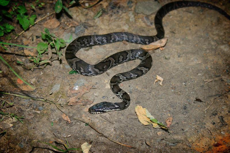 Змеи проснулись: что делать, чтобы не покусали?