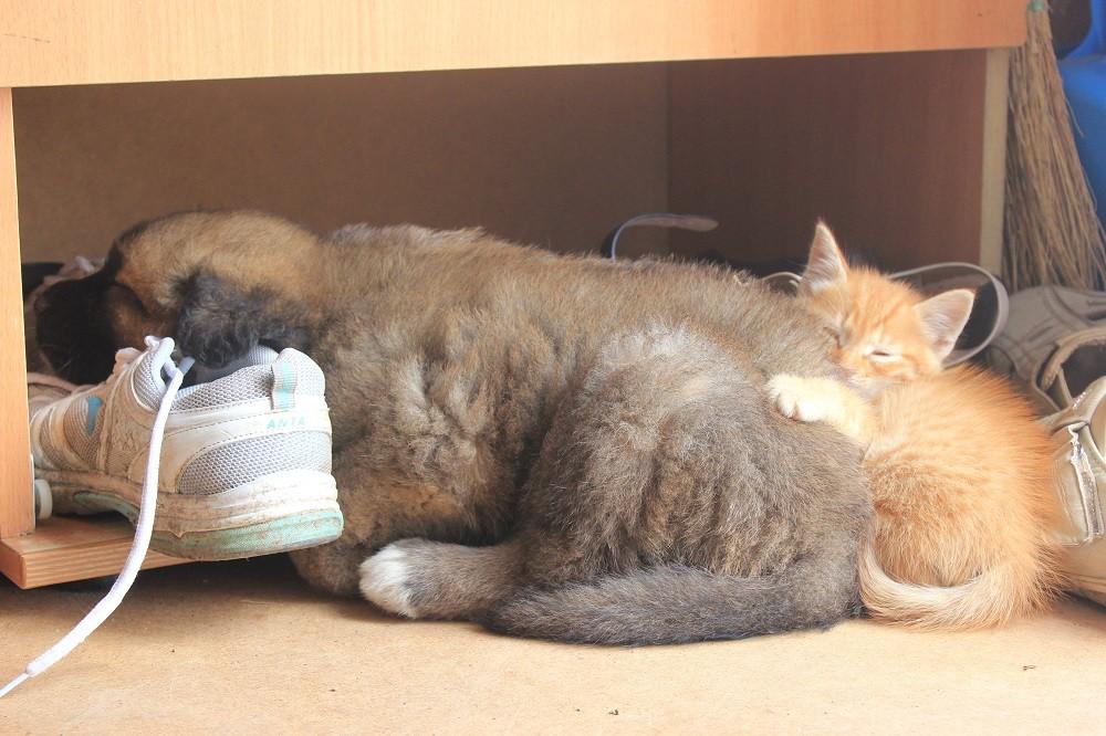 Пятничные котики хабаровчан: рыжий бандит Алекс, которого хочется холить и лелеять