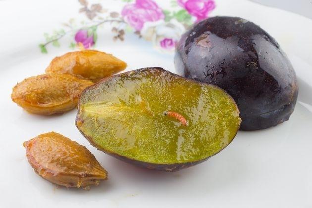 Меры борьбы с мониллиозом и сливовой плодожоркой