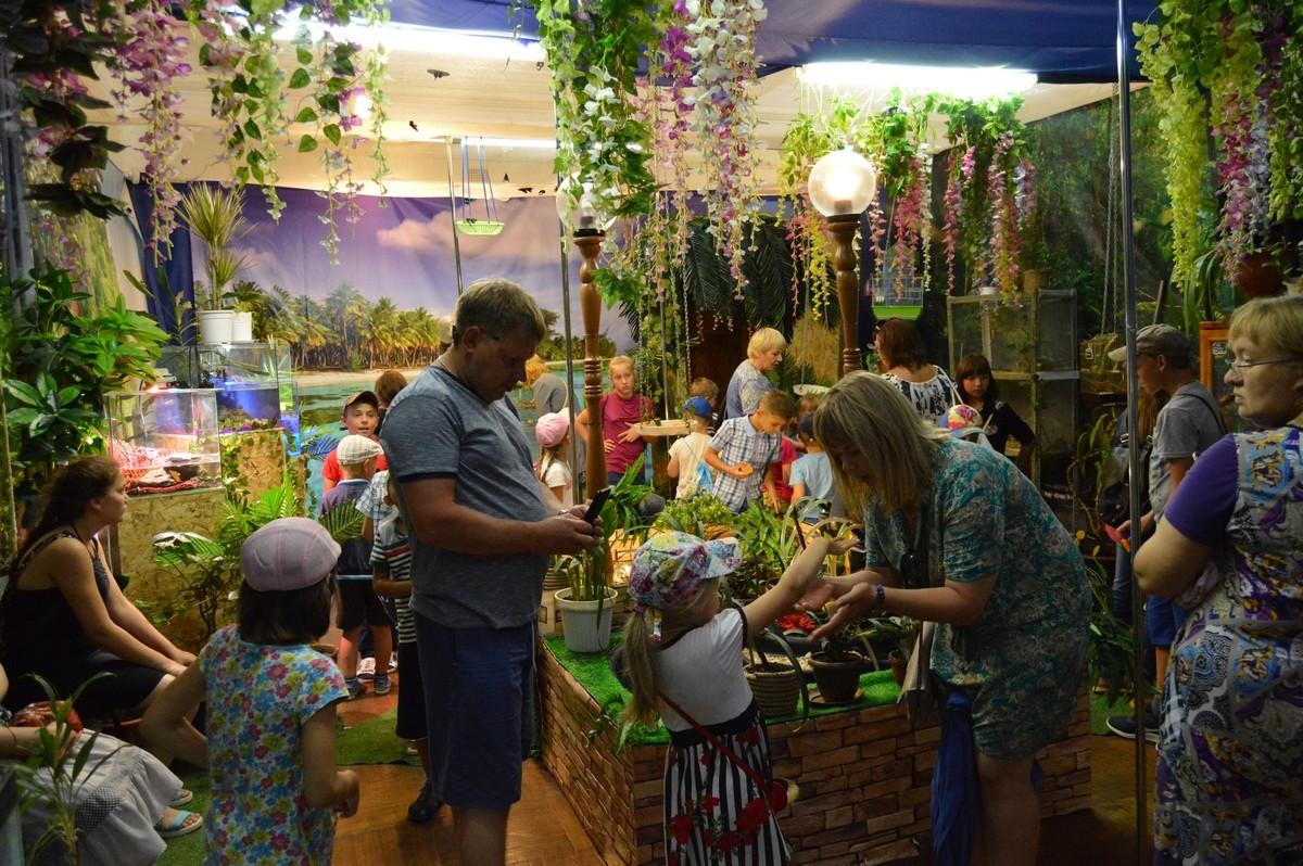 музея живыми бабочки выставки хабинфо 2018