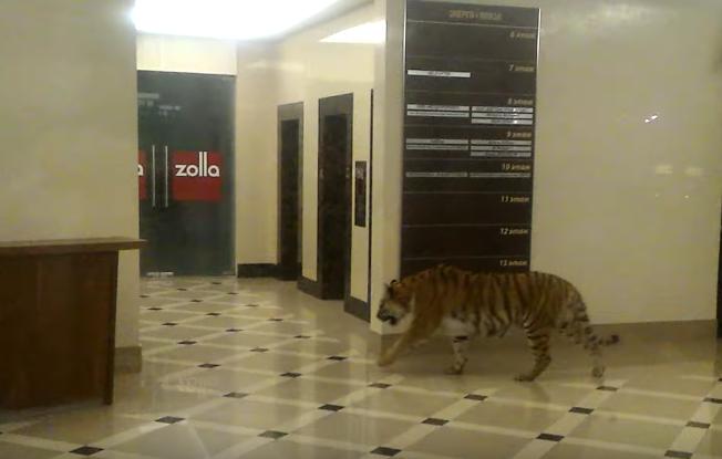 День поворачивания налево и День тигра