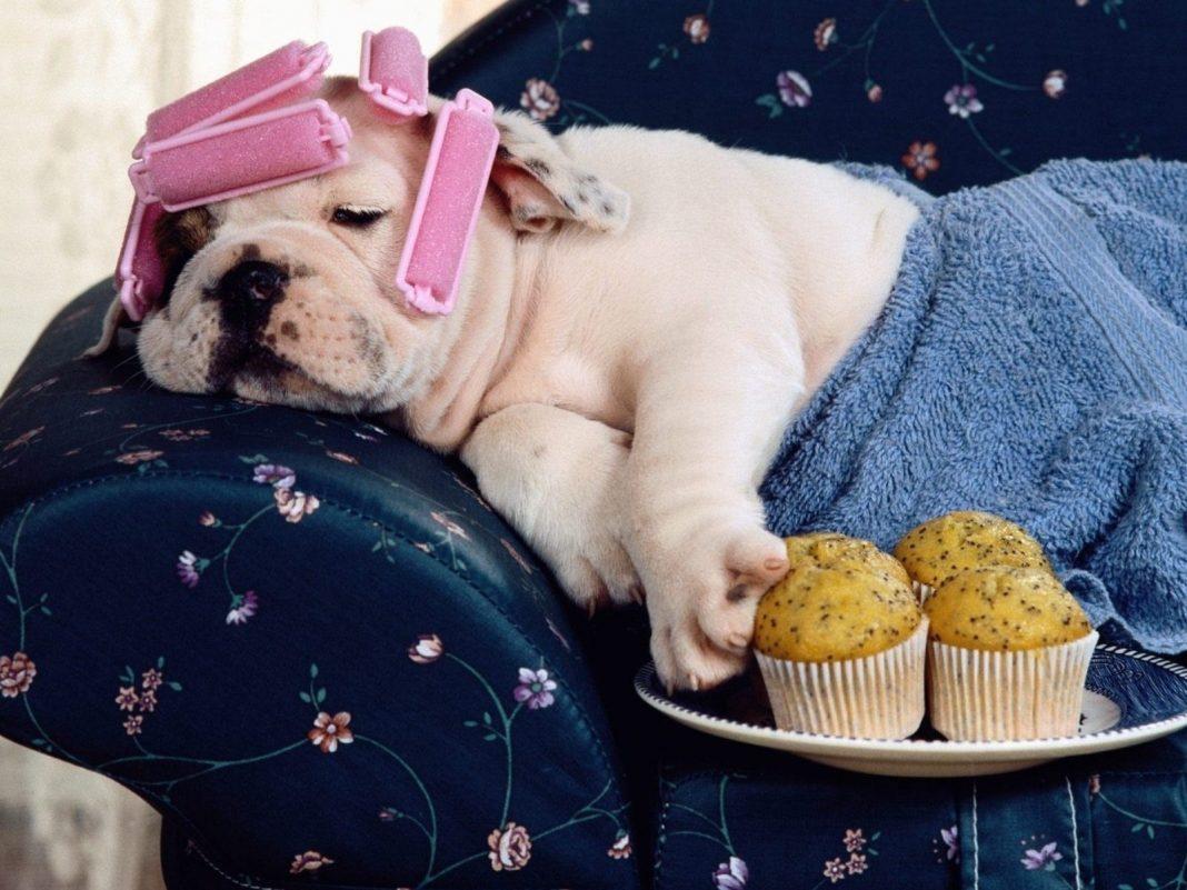 День рождения чипсов и День безработного лентяя